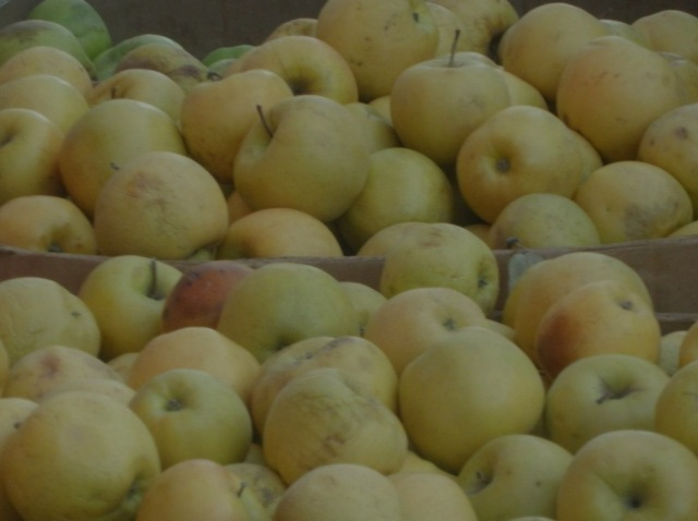 apples ukr anna