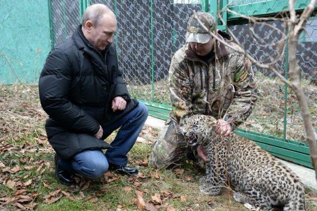Sochi Persian leopard breeding rehab centre Putin and Dir Umar Semyonov.