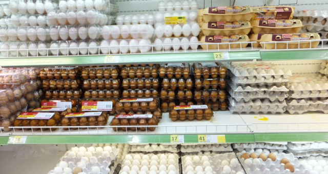 eggs in grivna b